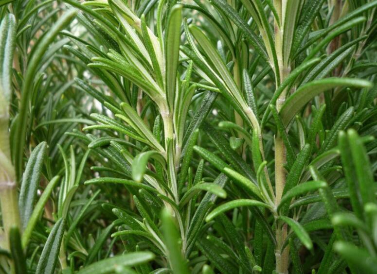 organic plants with sheep manure organic fertilizer
