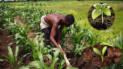nigeria fertilizer market