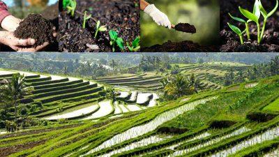 fertilizer in indonesia