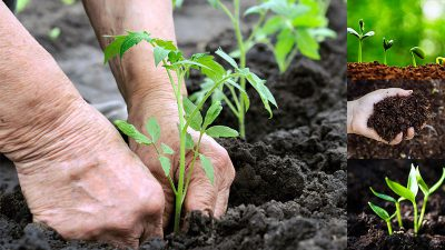 organic fertilizer benefits