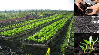 organic fertilizer market in philippines
