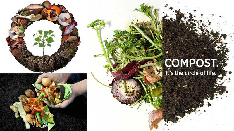 vegetable waste fertilizer