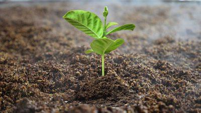 vinasse fertilizer production