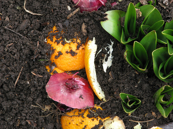 organic waste composting